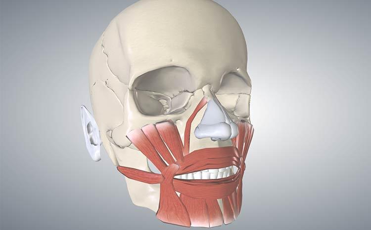 mięśnie twarzy lip sync